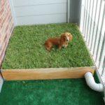 Come addestrare un cane a usare la lettiera