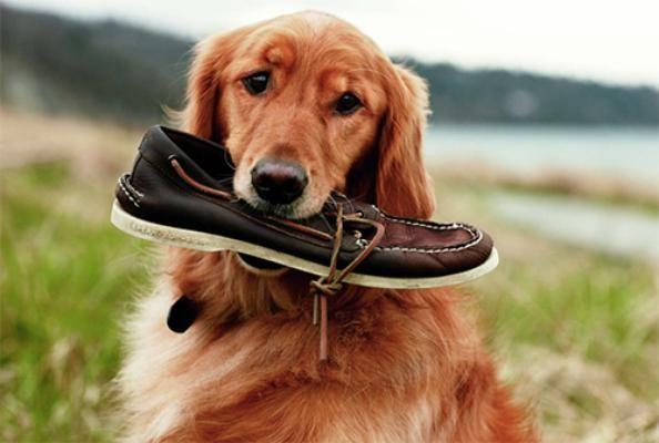Come educare un cane che morde tutto