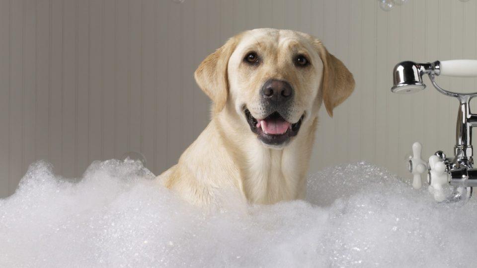 Igiene del cane: le regole del bagnetto