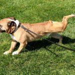 Perché i cani raspano il terreno dopo i bisogni?