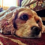 Perché i cani sospirano?
