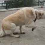 Come aiutare un cane pauroso?