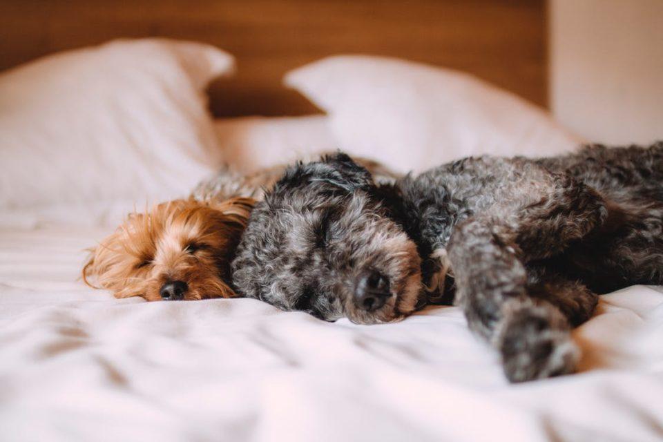 Dormire con il cane: quali rischi?