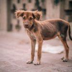 Leptospirosi nel cane: prevenzione, cura e sintomi