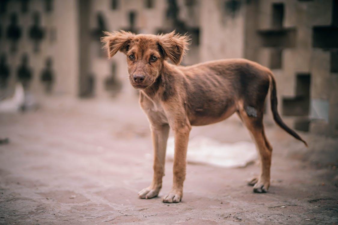 Leptospirosi nel cane, prevenzione, cura e sintomi