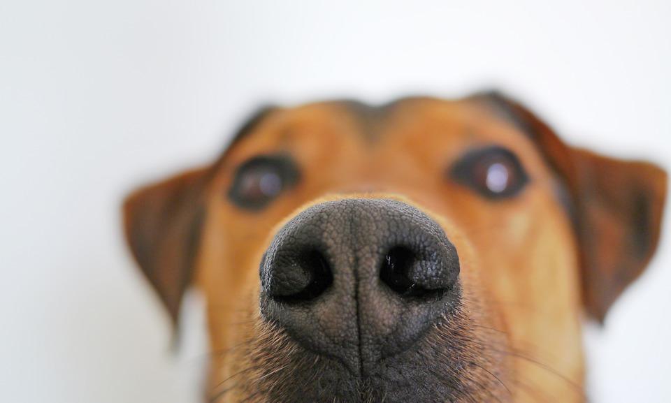 Perché i cani annusano il sedere?