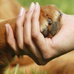 Perché i cani danno la zampa?