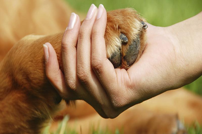 Il cane che dà la zampa