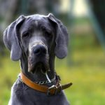 Quali sono le fobie dei cani?
