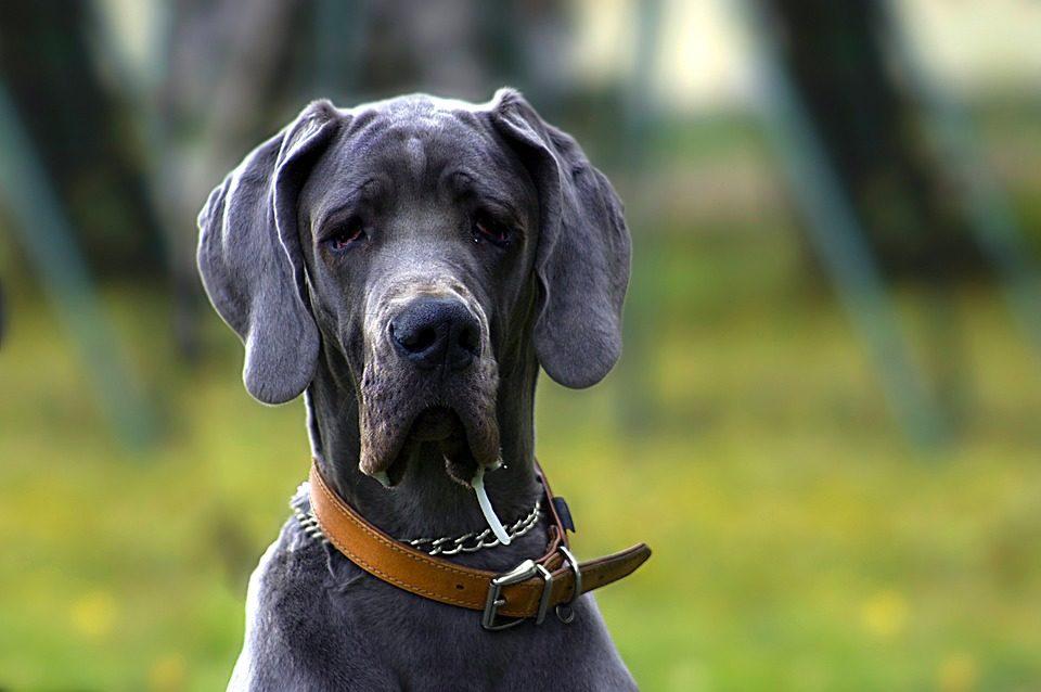 Fobie dei cani, quali sono e quali sono i sintomi