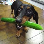 Quali sono le reazioni di un cane colpevole?