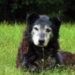Come aiutare un cane anziano?