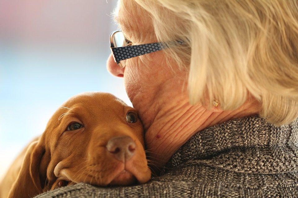 Come capire se il tuo cane ti vuole bene?