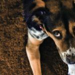 Come prevenire la filariosi nel cane