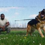 Psicologo dei cani