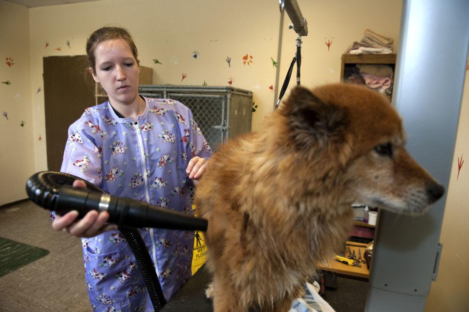 Professioni cani: Il toelettatore per cani