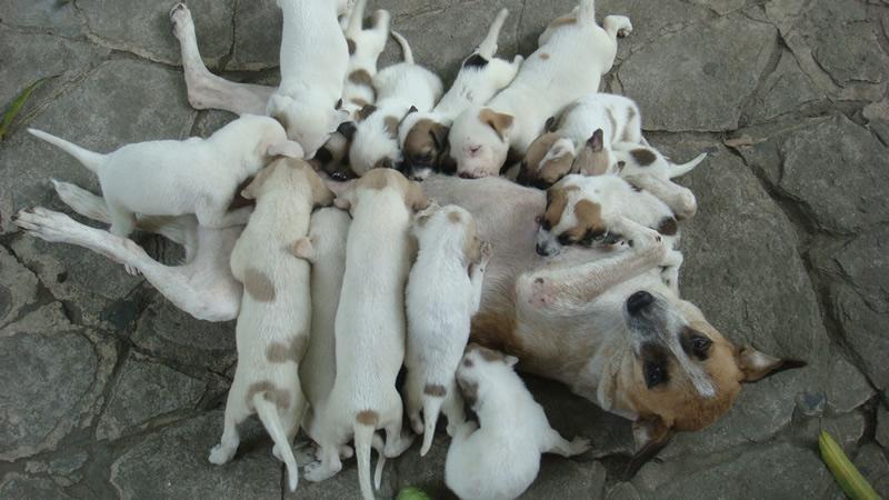 Alimentazione per cani che stanno allattando