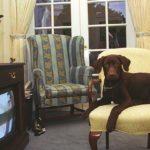Dog hosting