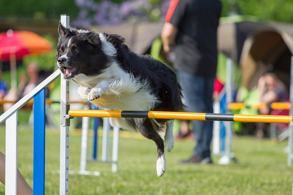 Professioni cani: Esperto Dog Agility