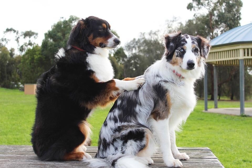 Professioni cani: operatore pet wellness center
