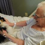 Professioni cani: Terapista dei cani (Pet therapist)