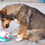 Quantità di carne al giorno per un cane
