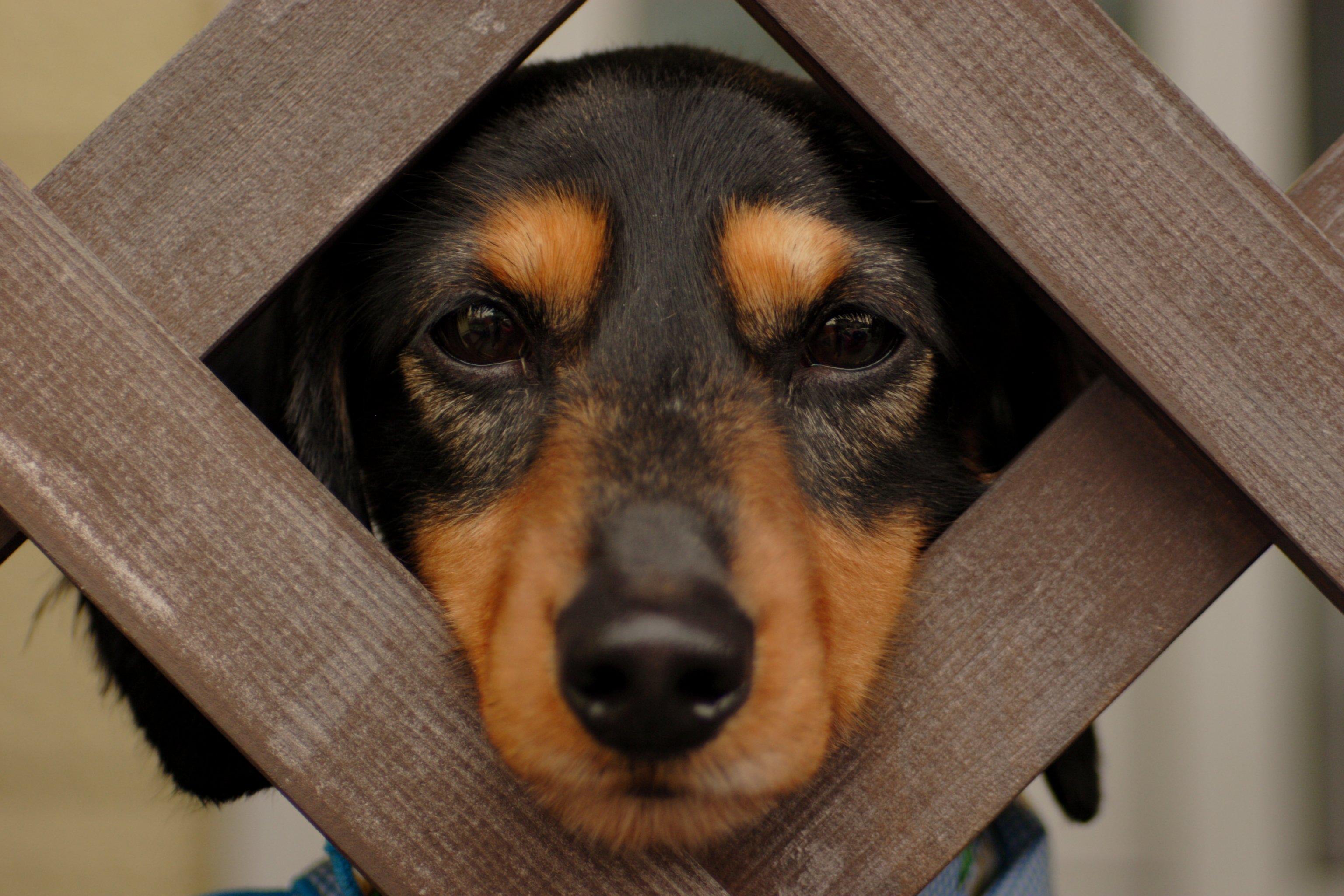 Cose strane che fanno i cani