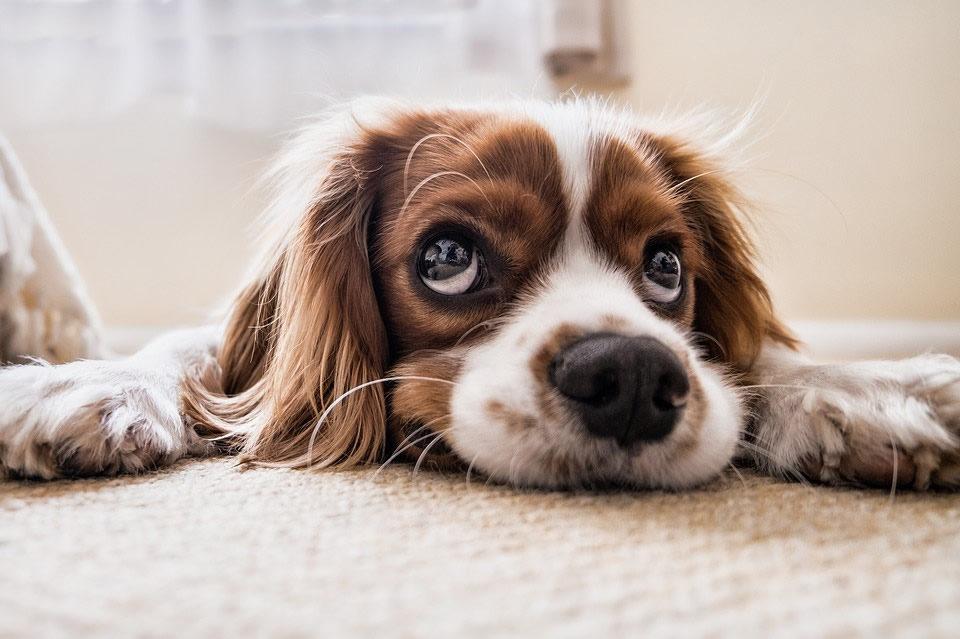 Reazioni cani sgridati: quali sono?