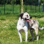 Richieda adozione cagnolina Brenda, razza meticcia