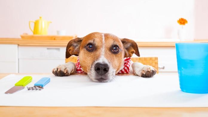 Educare il cane a non chiedere cibo a tavola