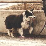 Come scegliere il guinzaglio più adatto per un cane?