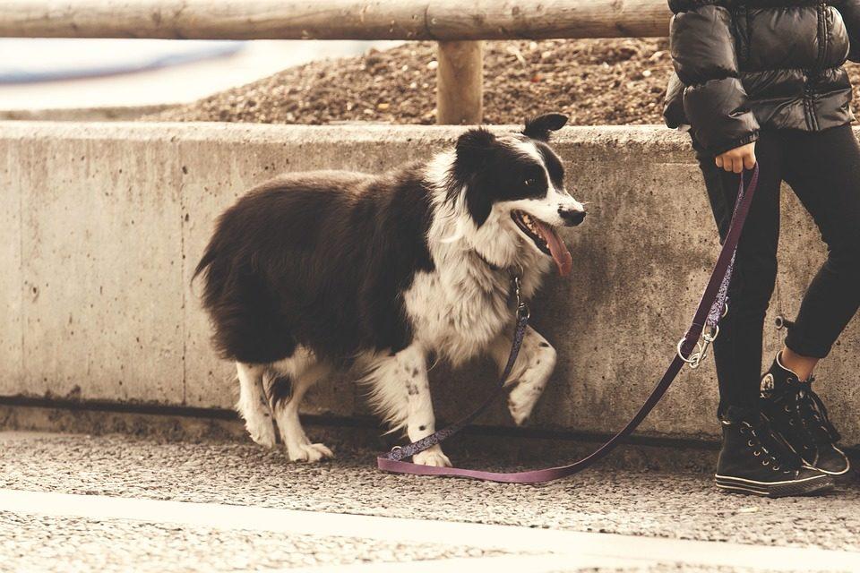 Guinzaglio per il tuo cane