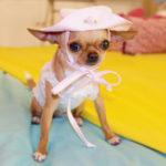 Come proteggere il tuo cane dal sole