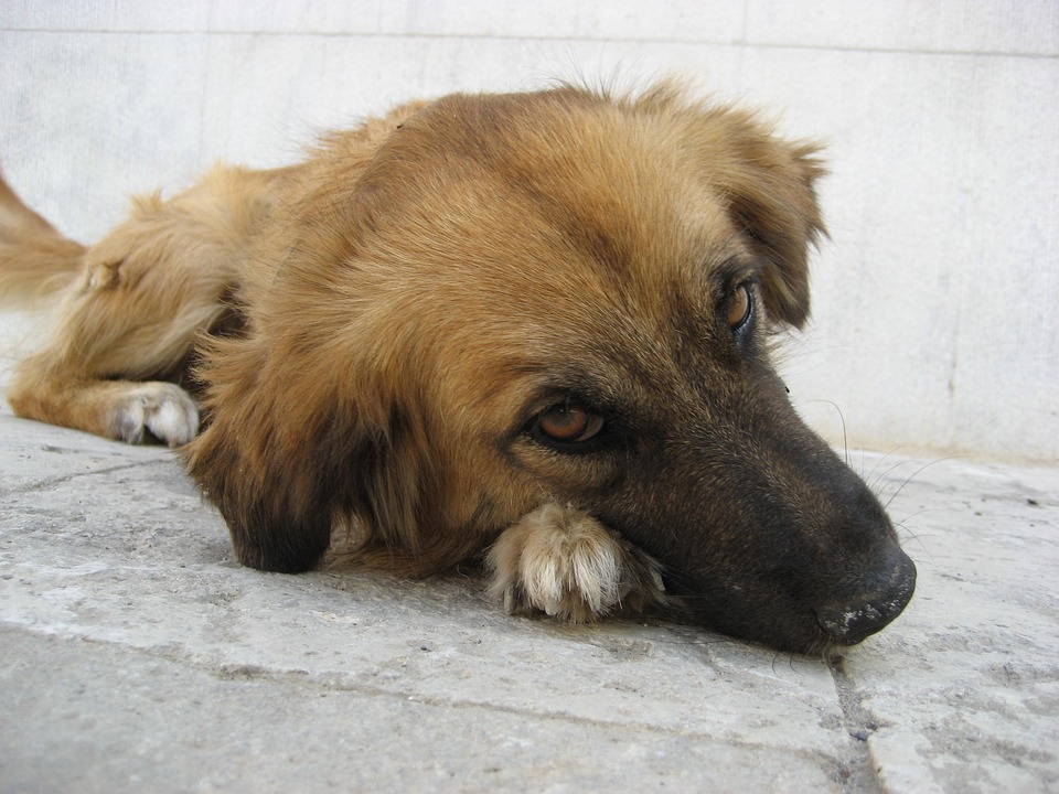 Insufficienza renale del cane dieta