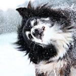 Cani sulla neve