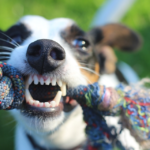Carie nel cane