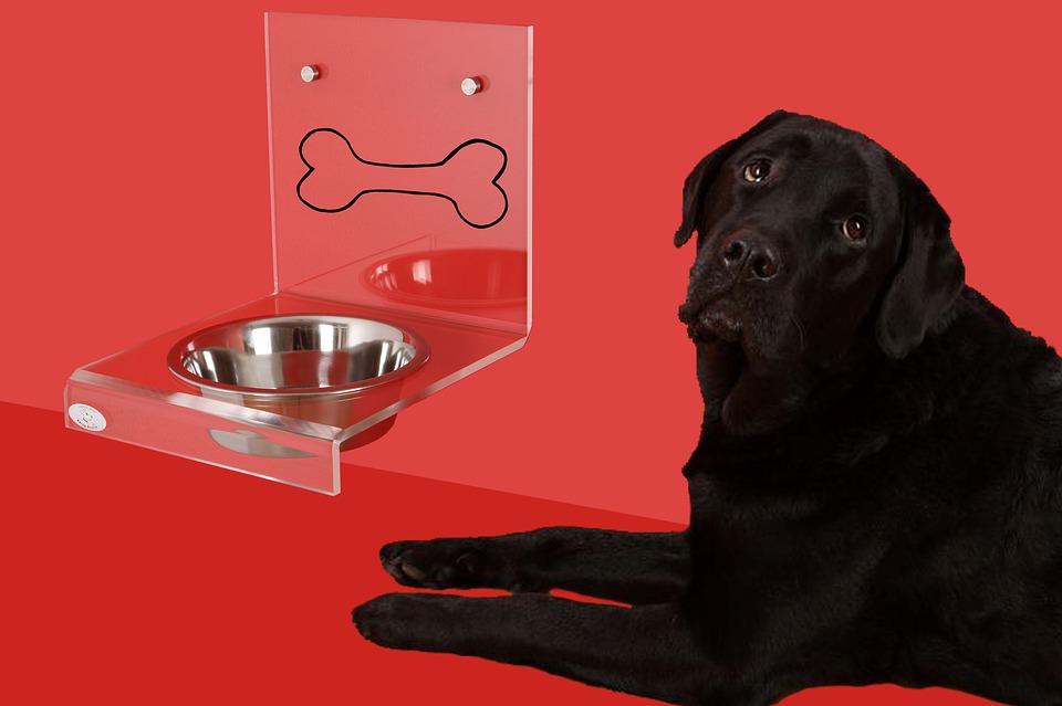 alimentazione cane con prostata