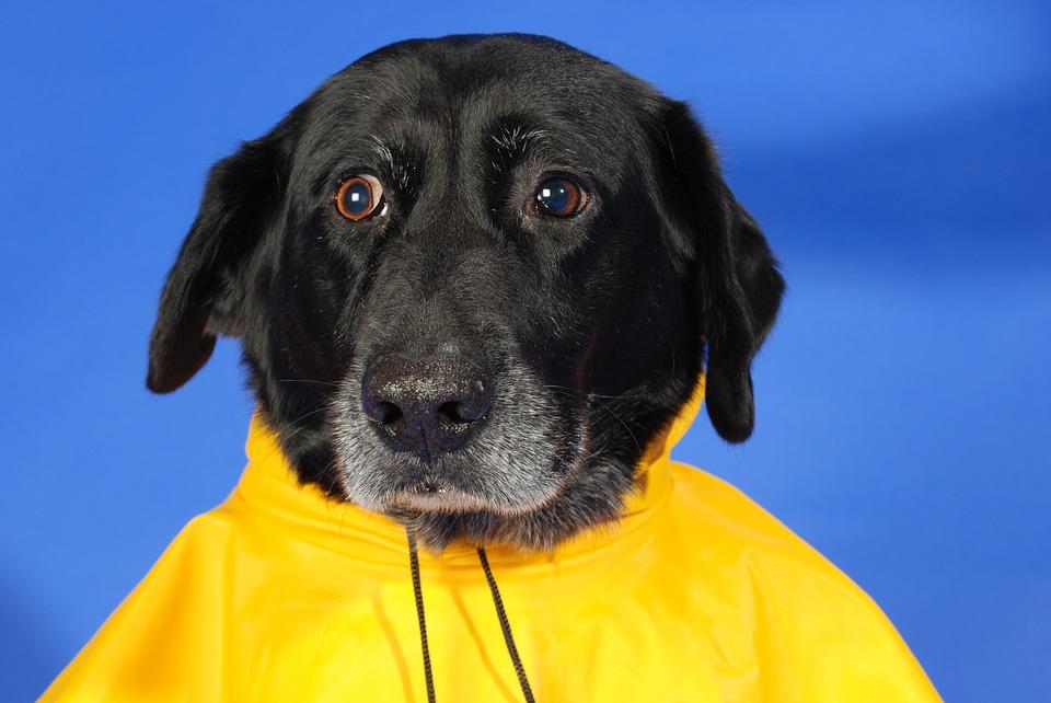 Il cane che ha paura del temporale