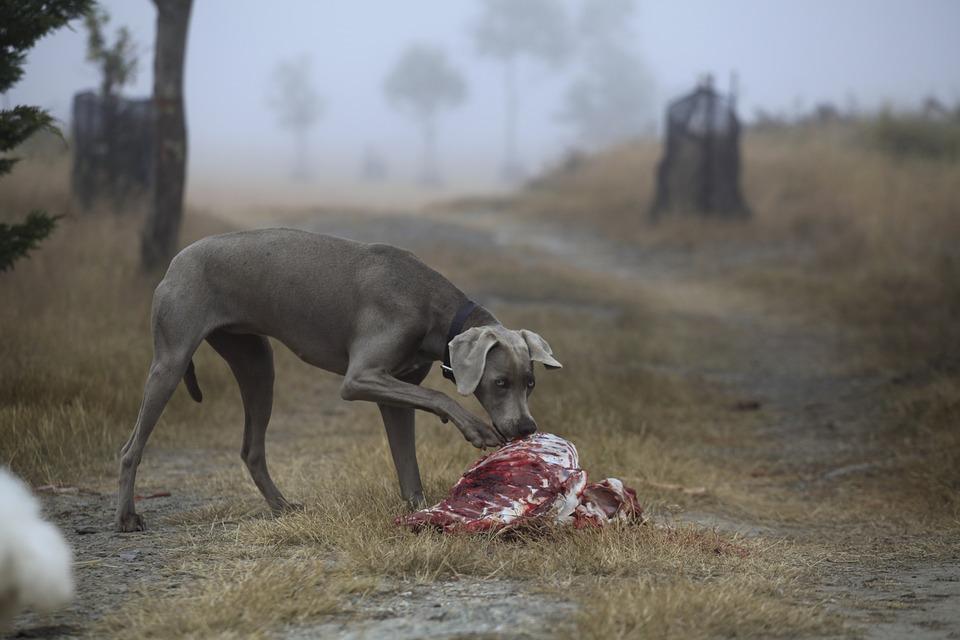 Carne cruda al cane