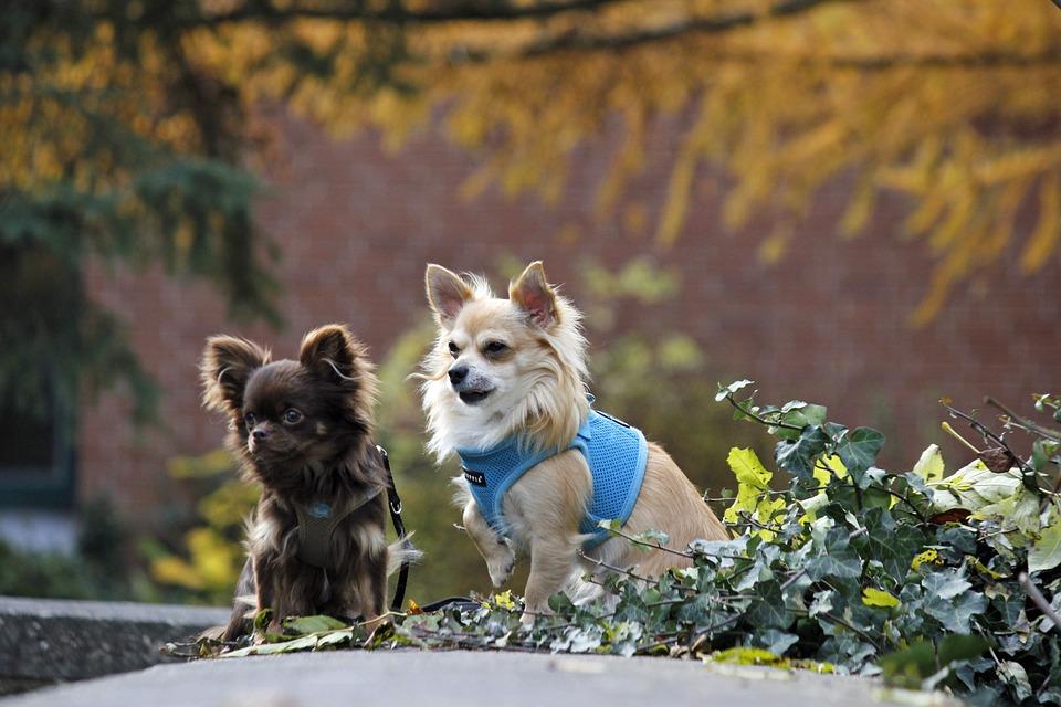 Convivere con più cani