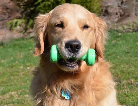 Come fare ingrassare il proprio cane