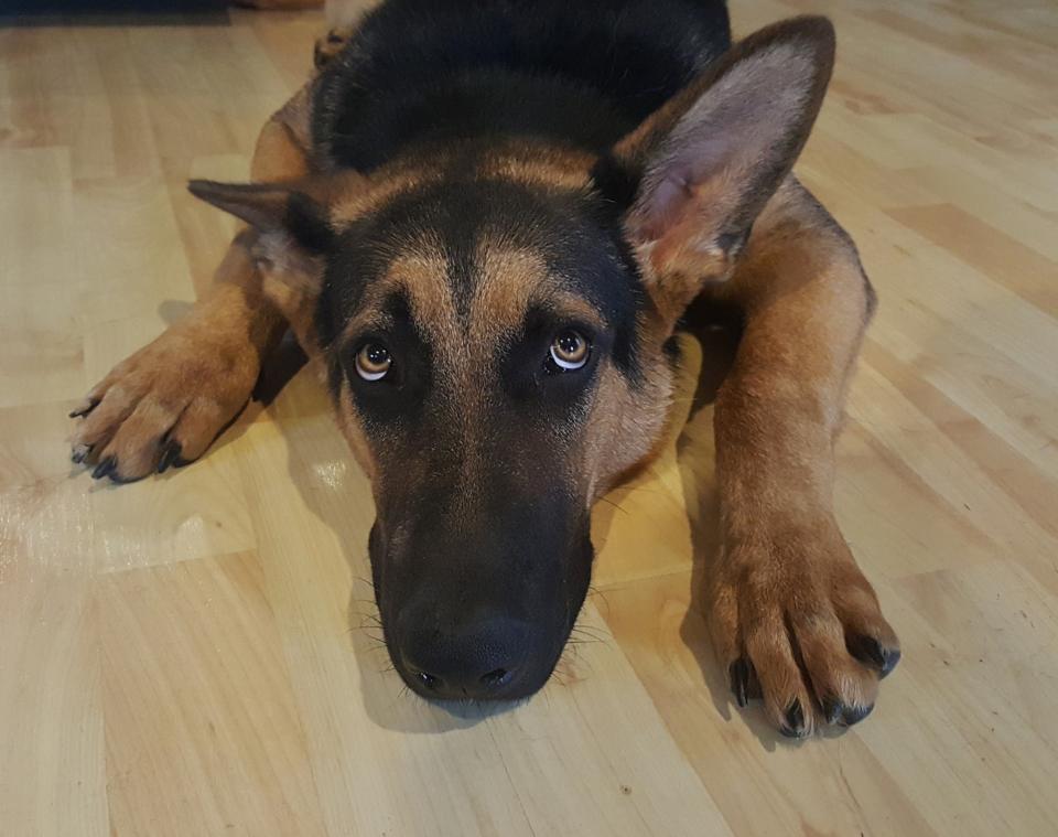 Cane ha paura dei botti