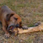 Cane mangia troppo velocemente