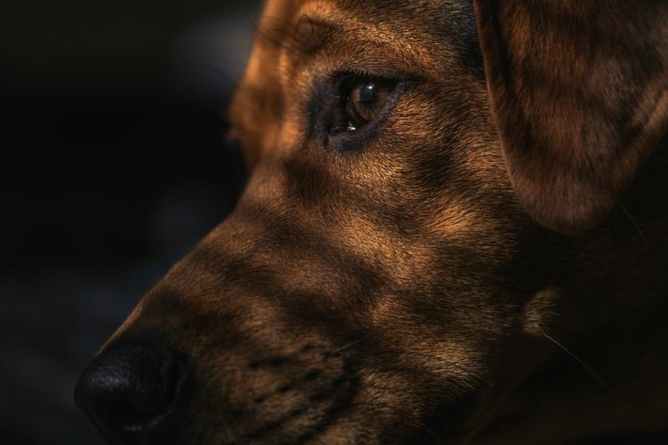 Cane insegue le ombre