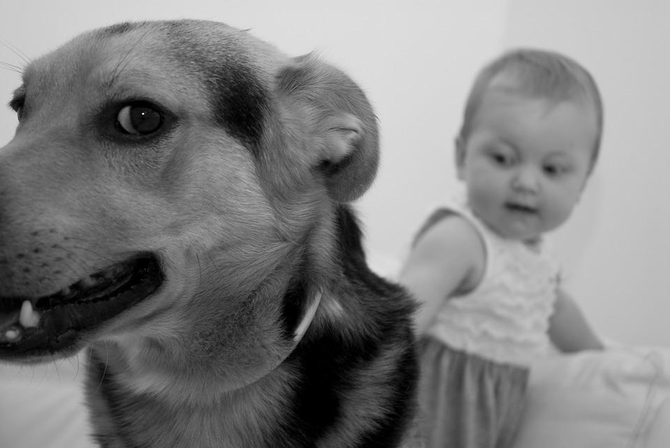 Cani vivono meno delle persone