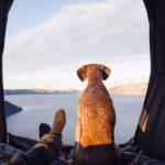Storia di un cane adottato