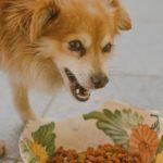 Cane ringhia quando mangia