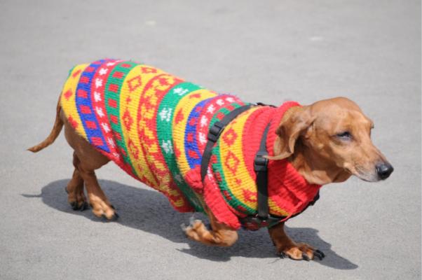 Vestiti per cani