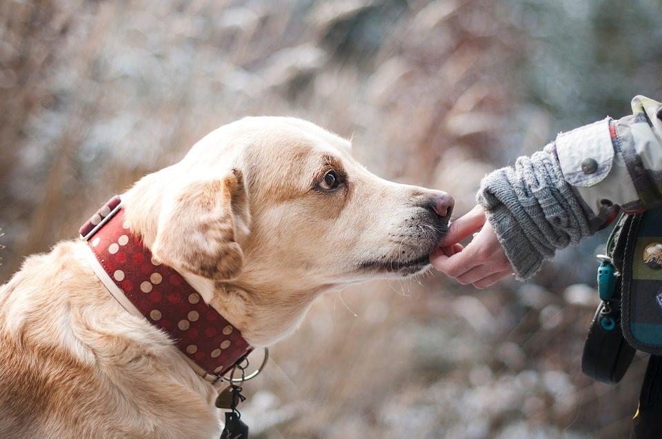 Come calmare un cane nervoso