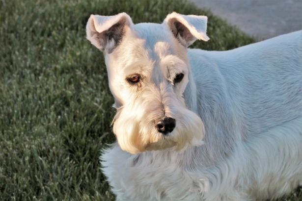 Baffi del cane
